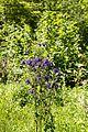 Naturpark Thal cassinam 37.jpg