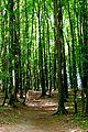 Naturschutzgebiet Granitz - Forst Werder (1).jpg