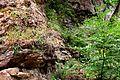 Naturschutzgebiet Saupark - Kleiner Deister - Felsformation der oberen Jura (Korallenoolith) (14).jpg