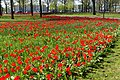 Natuur Breda P1360731.jpg