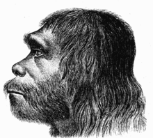 http://upload.wikimedia.org/wikipedia/commons/thumb/9/9b/Neanderthaler_Fund.png/220px-Neanderthaler_Fund.png