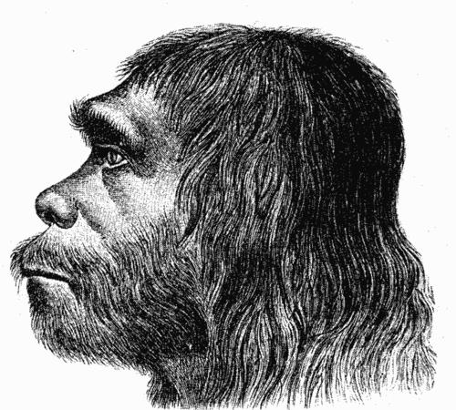 bf30d635025 Recontrução facial de um Homo neanderthalensis(Smithsonian Museum of  Natural History)