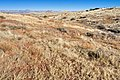 Near Ash Peak Canyon - Flickr - aspidoscelis (2).jpg