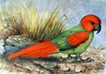 Necropsittacus borbonicus.png