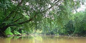 Neuse River - Along much of its length, the Neuse River is characterized by loose, sandy banks; muddy water year-round, and a dense tree canopy overhead.