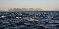 New 0297 dolphins False Bay JF.jpg