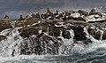 New 8650 Seal Island JF.jpg