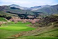 New Zealand - Rural landscape - 9767.jpg