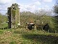 Newton Church Ruins - geograph.org.uk - 1885862.jpg