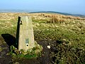 Newton Moor Top trig point, 291m - geograph.org.uk - 1214053.jpg
