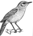 Nightingale 1 (PSF).png