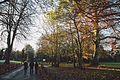 Nonsuch Park in Winter, Surrey.jpg