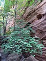 Not Shelf Canyon - panoramio (4).jpg