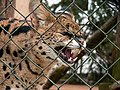 Oaklawn Farm Zoo, May 16 2009 (3539745598).jpg