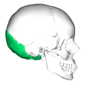 Occipital bone lateral.png