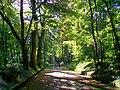 Ognon (60), parc d'Ognon, allée du Mail.jpg