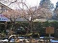 Ogose Plum Tree In Ogosebairin 2.JPG