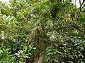 Ontibetta (Kannada- ಒಂಟಿಬೆತ್ತ) (5658709292).jpg