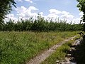 Orchard, Bradford - geograph.org.uk - 489400.jpg
