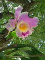 Orquídea2.jpg