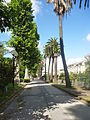 Orto botanico di Napoli 204.JPG