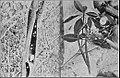 PSM V84 D304 Desert snails.jpg