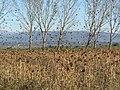 Padule di Bientina - panoramio.jpg