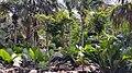 Palmetum10.jpg