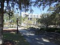 Palms, Gainesville City Hall.JPG