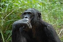 Jane Goodall Wikiquote