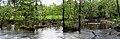Panorama - Naturschutzgebiet an der Würm.jpg