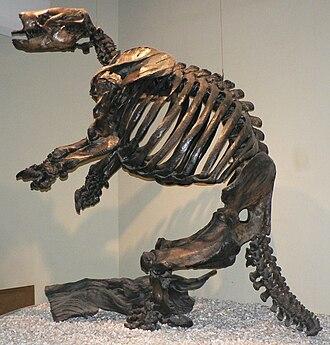 Paramylodon - Skeleton from the La Brea Tar Pits
