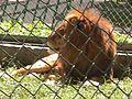 Parque Zoologico de Caricuao 2000 020.JPG