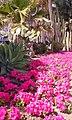 Paseo maritimo close up - Estepona Garden of the Costa del Sol.jpg