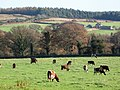 Pastures near Slaley - geograph.org.uk - 611165.jpg