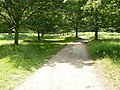 Path in Wollaton Park - geograph.org.uk - 1381209.jpg