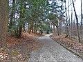 Path in forest-Croatia.jpg