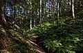 Path to a sunny patch in Gullmarsskogen ravine 4.jpg
