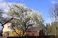 Pavasaris. Spring - panoramio.jpg
