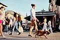 Pavia, Italia (49937550568).jpg