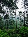 Pemandangan di Kaki Gunung Welirang.jpg