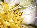 Peony close up - AKA Neomi EP.jpg