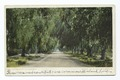 Pepper Drive, Riverside, Calif (NYPL b12647398-63165).tiff