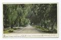 Pepper Drive, Riverside, Calif (NYPL b12647398-63165).tiff