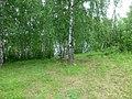 Permskiy r-n, Permskiy kray, Russia - panoramio (1205).jpg
