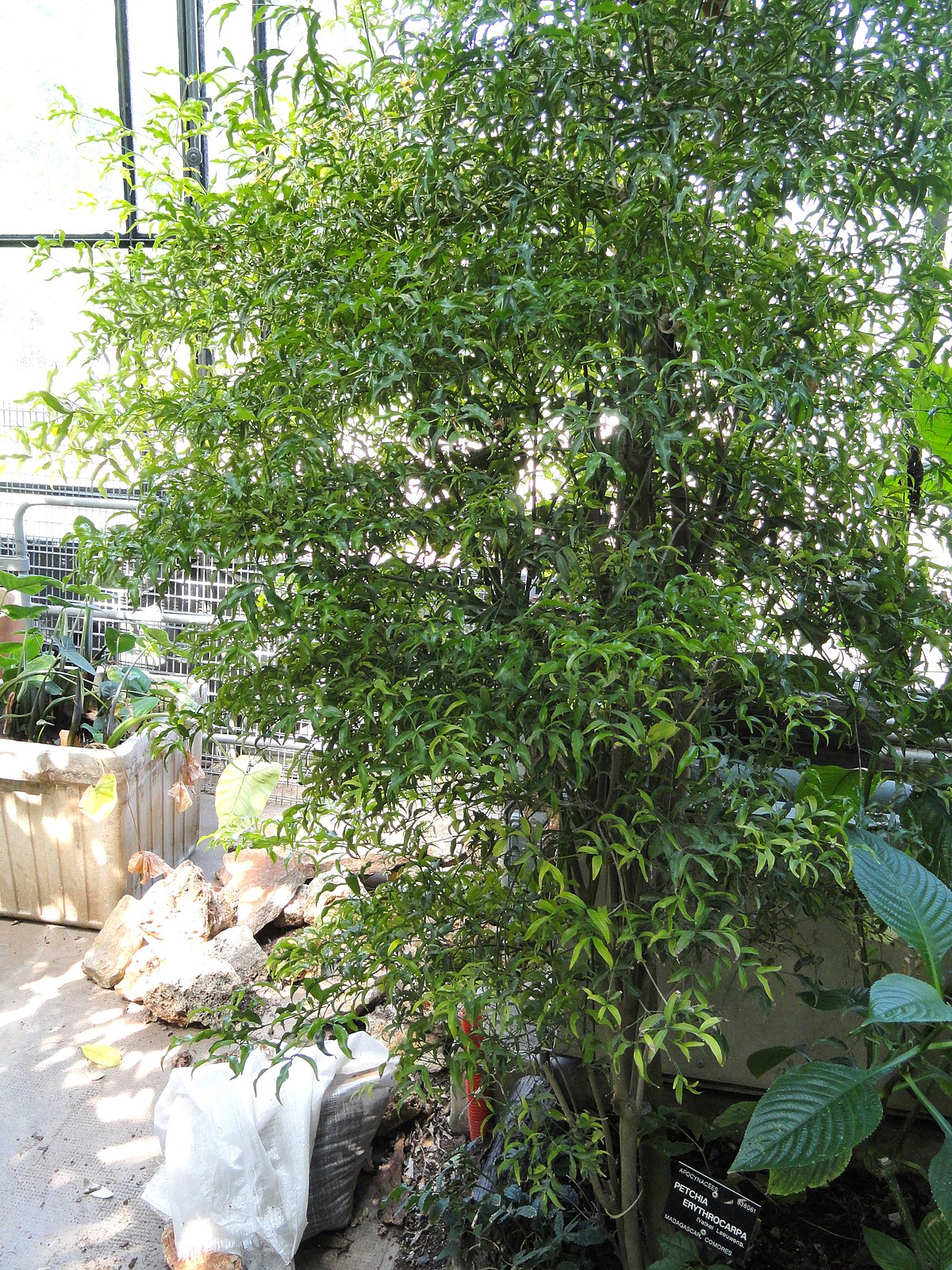 Petchia wikidata for Jardin botanique de conception