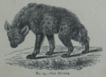 Picture Natural History - No 14 - The Hyena.png