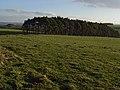 Pines, Hamburn - geograph.org.uk - 298514.jpg