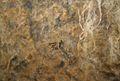 Pintures rupestres de la cova del barranc del Migdia (reproducció), museu Soler Blasco.JPG
