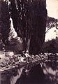 Plüschow, Wilhelm von (1852-1930) - n. 0831 - Frascati, villa Falconieri - recto.jpg
